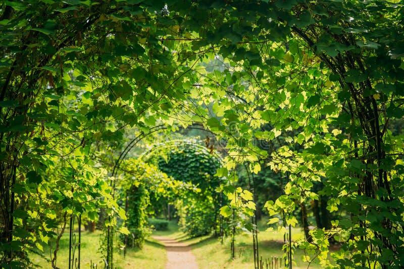 Piękna aleja w parku Przejścia pas ruchu ścieżka Przez pergoli Z obrazy royalty free