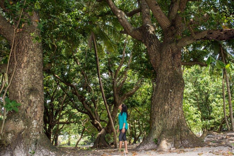 Piękna azjatykcia dziewczyna patrzeje dużych drzewa wśrodku tropikalnego lasu zdjęcia royalty free