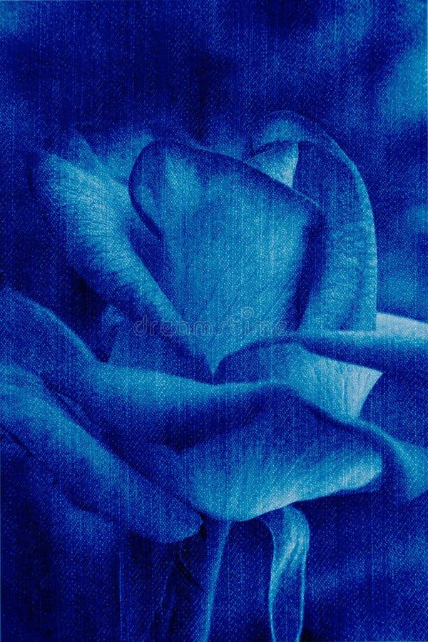 Piękna błękita róża, abstrakcjonistyczny cajg tekstury kwiatu tło zdjęcie royalty free