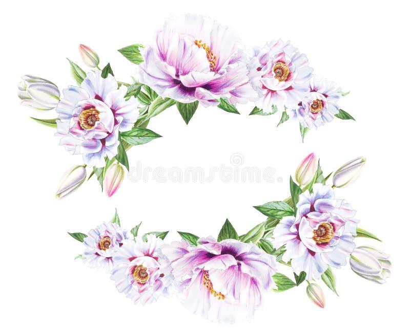 Piękna biała peonia i biała tulipan rama Bukiet kwiaty Kwiecisty druk Markiera rysunek fotografia stock