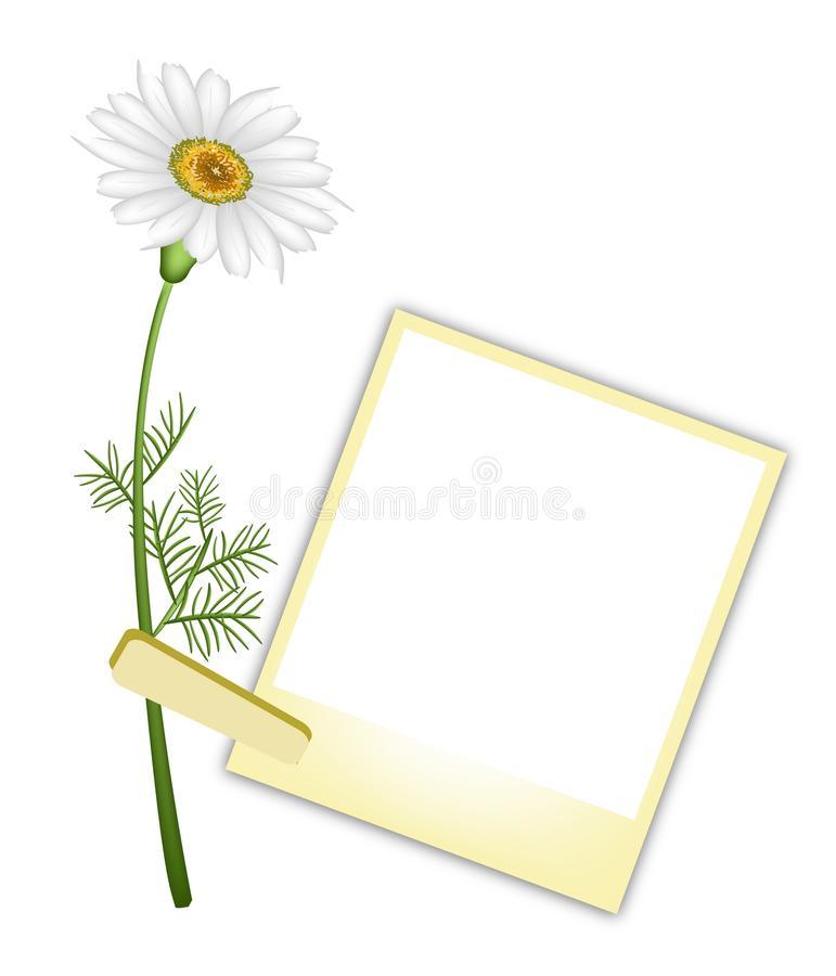 Piękna Biała stokrotka z Pustymi fotografiami royalty ilustracja