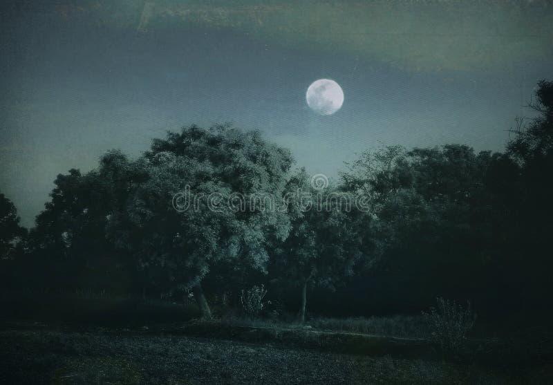 Piękna blask księżyca noc wieś royalty ilustracja