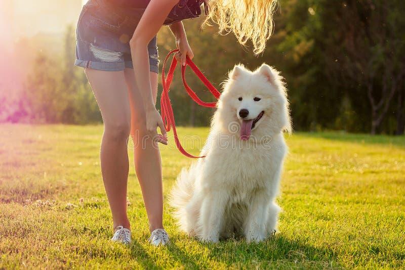 Piękna blondynka uśmiechająca się szczęśliwa młoda kobieta w dżinsowych spodenkach, trenująca latem białego, słodkiego, samoopali obraz royalty free