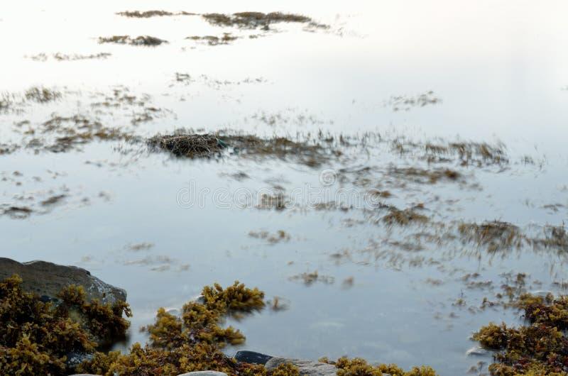 Piękna brown gałęzatka unosi się w spokojnym fjord obraz stock