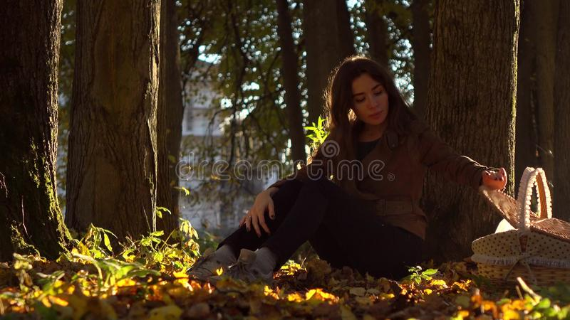 Piękna brunetki dziewczyna z pyknicznym koszykowym obsiadaniem pod drzewem w jesień lasu Ciepłym słonecznym dniu obrazy royalty free