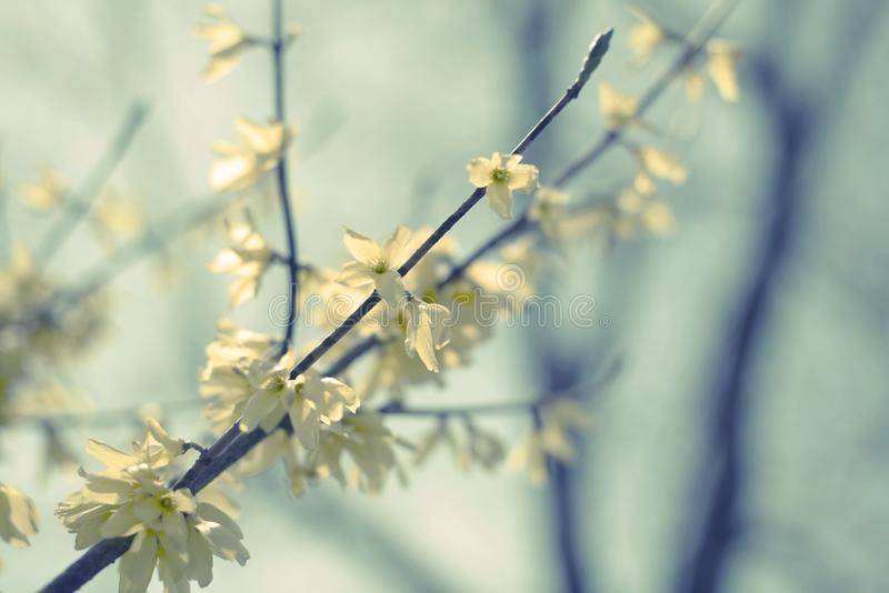 Piękna brzozy gałąź z zielenią opuszcza w niebie obrazy stock