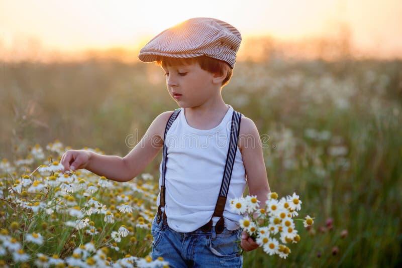 Piękna chłopiec w stokrotki polu na zmierzchu obraz stock