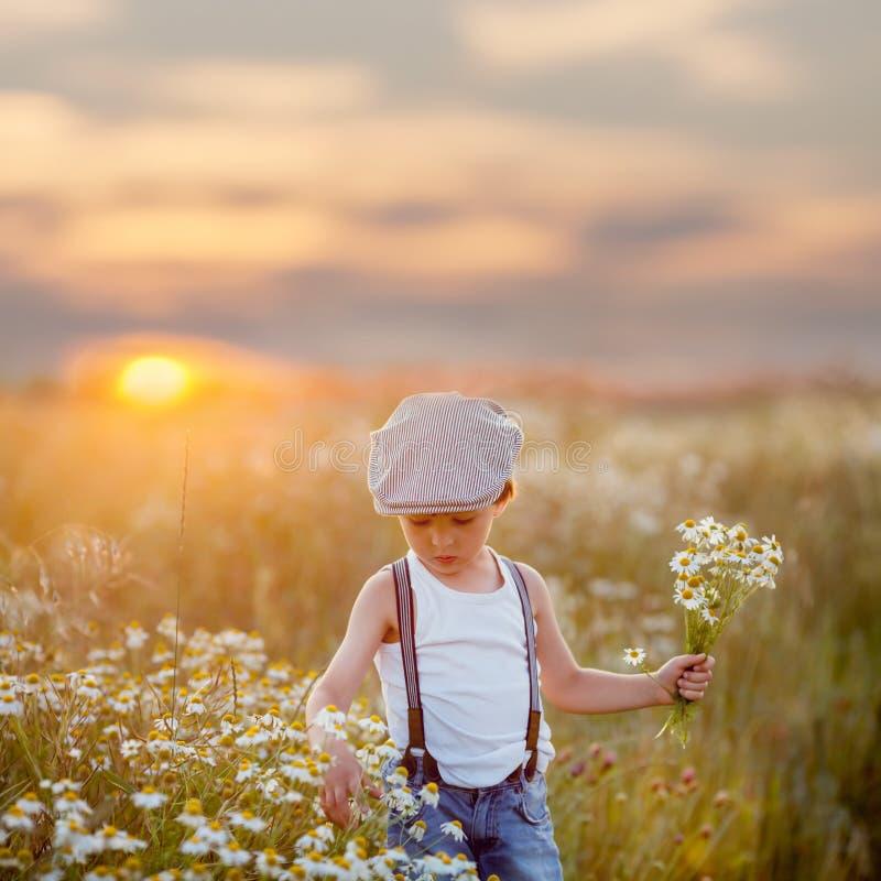 Piękna chłopiec w stokrotki polu na zmierzchu obrazy stock