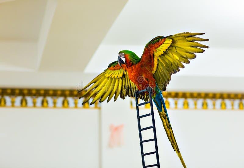 Piękna colourful papuga obraz stock