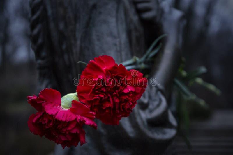 Piękna czerwień kwitnie na zabytku zdjęcia stock