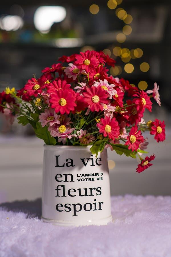 Piękna czerwieni i menchii chryzantema kwitnie w białej wazie używać dla domowej dekoracji obrazy stock