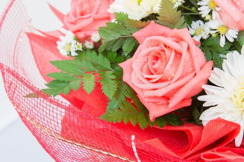 Piękna czerwieni róża kwitnie z wodnymi kroplami obrazy royalty free