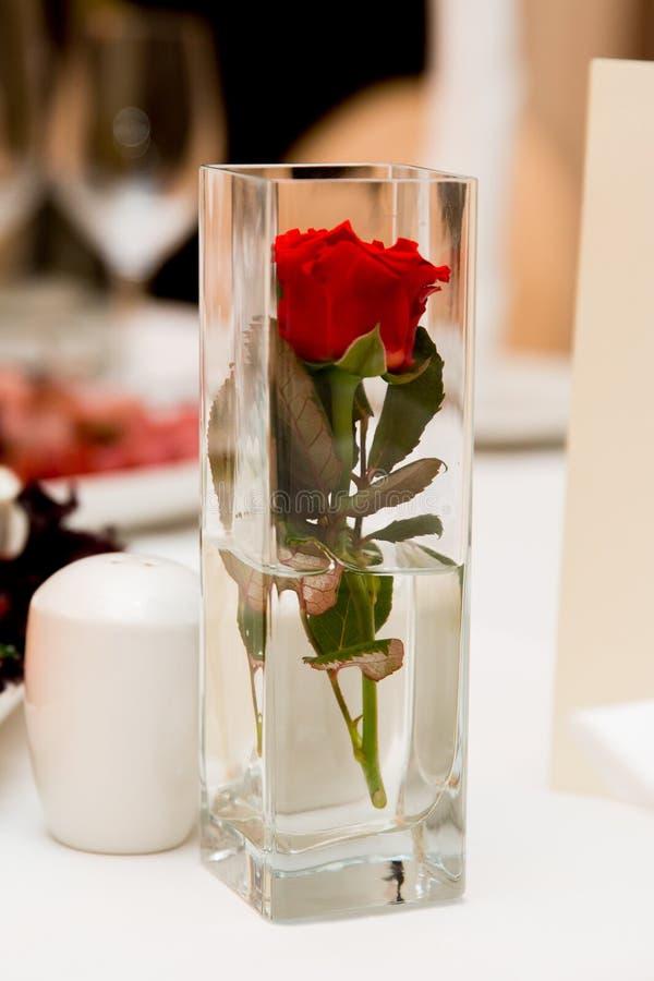 Piękna czerwieni róża w jasnej kwadratowej wazie fotografia stock