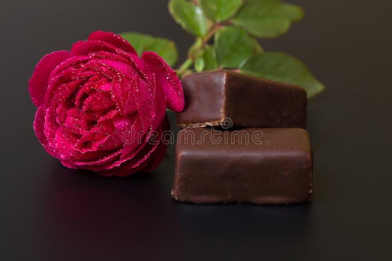 Piękna czerwieni róża z rosa kroplami i czekoladowym cukierkiem zdjęcie royalty free