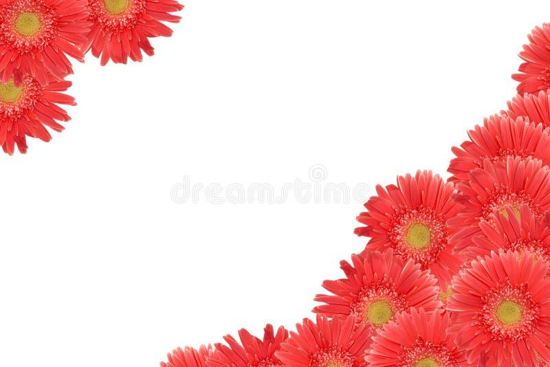 piękna daisy ramy połowę zdjęcia stock