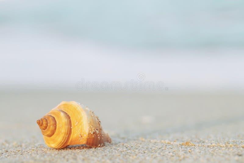 Piękna denna skorupa na piasku z falą na plaża obraz royalty free