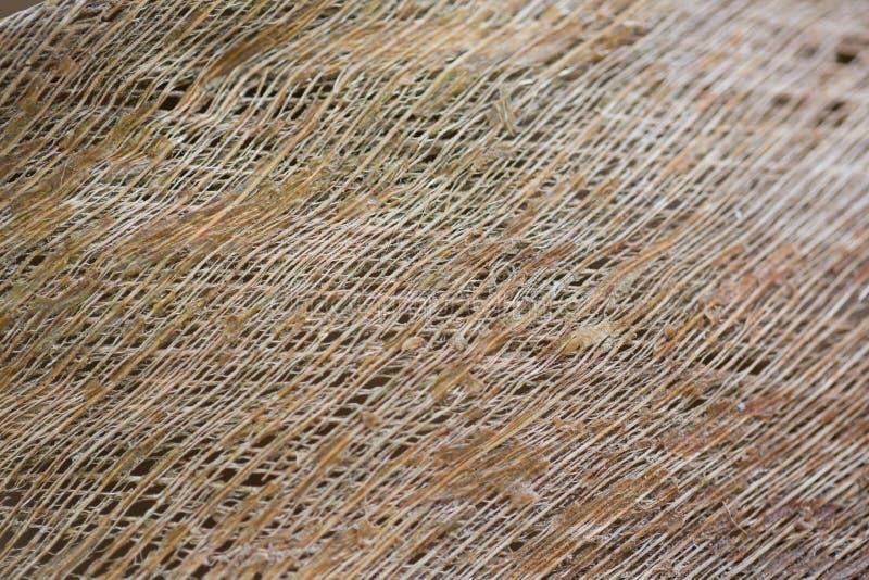 Piękna drewniana ścienna tekstura zdjęcie royalty free