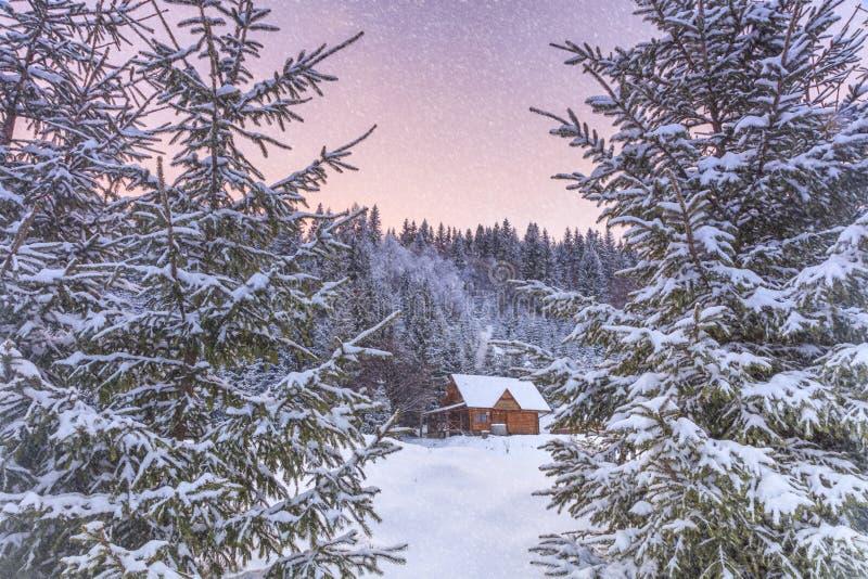 Piękna drewniana buda w lesie zdjęcie royalty free