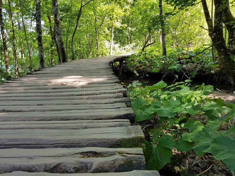 Piękna droga drewniane deski na Plitvice jeziorach obraz royalty free