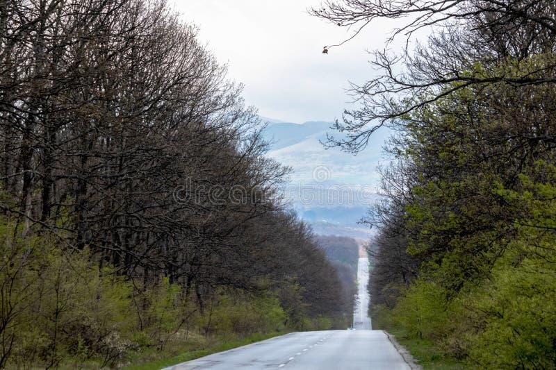 Piękna droga sposób wzdłuż zadziwiać naturę góry, las i natura, fotografia royalty free