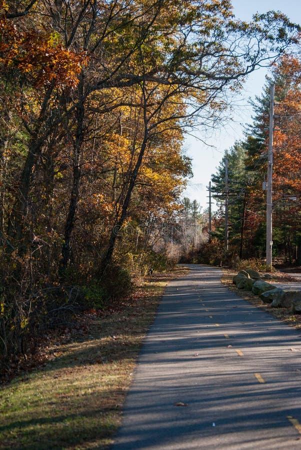 Piękna droga z drzewami fotografia stock