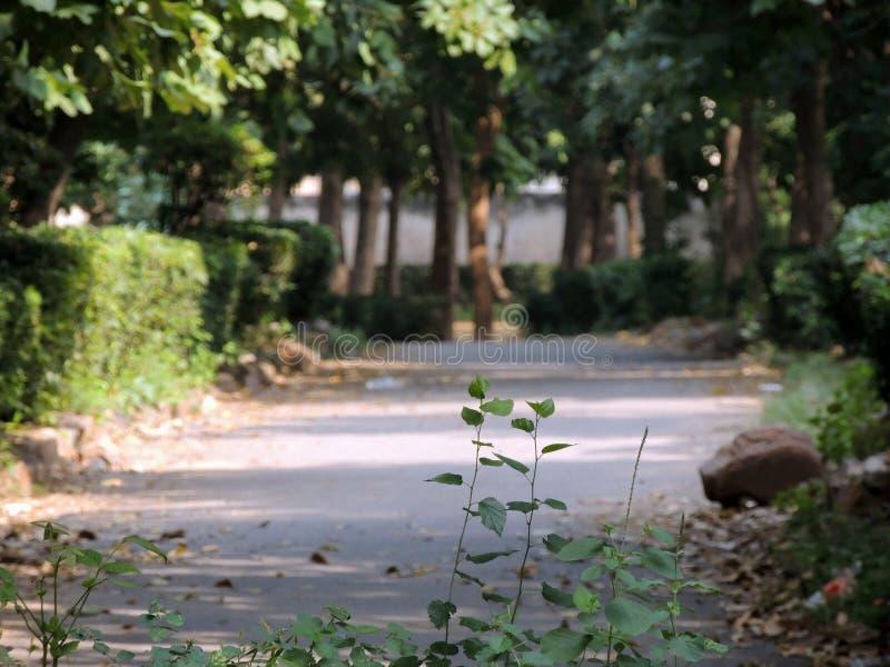 Piękna droga zakrywająca z drzewami zdjęcia royalty free