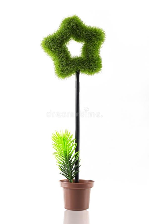 Piękna drzewna gwiazdowa trawa na garnku fotografia stock