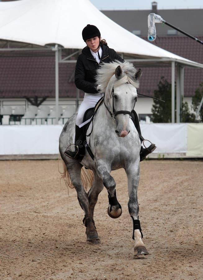 Download Piękna Dziewczyna I Szarość Koń W Arenie Sportowa Obraz Stock - Obraz złożonej z dressage, rywalizacja: 53788569