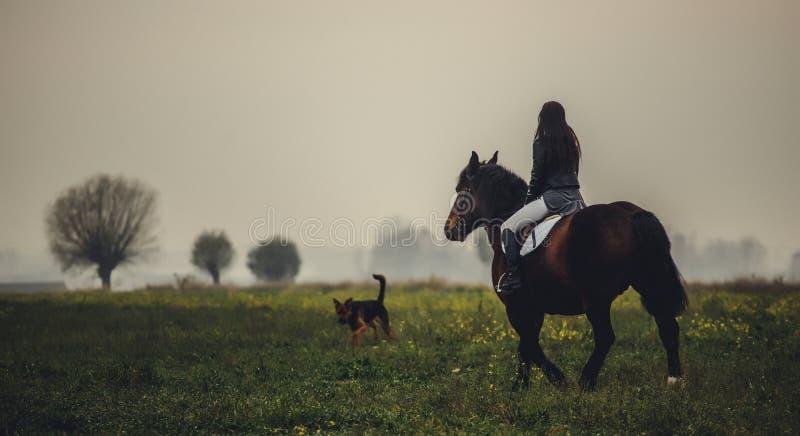 Piękna dziewczyna jedzie brown konia zdjęcia royalty free