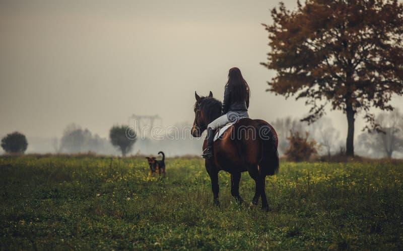 Piękna dziewczyna jedzie brown konia obraz royalty free