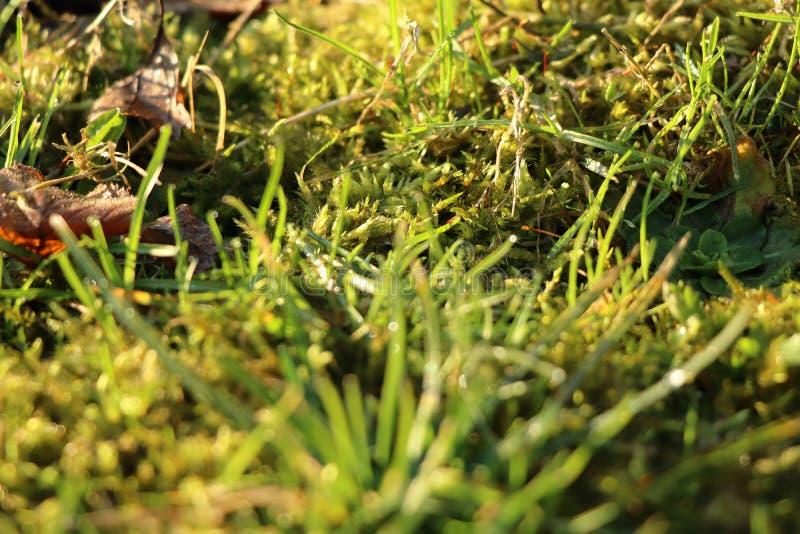Piękna dzika trawa po padać dzień z światłem słonecznym fotografia stock