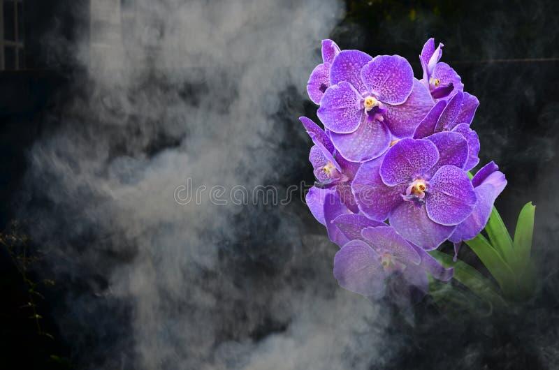 Piękna fiołkowa orchidea w dymu obraz royalty free