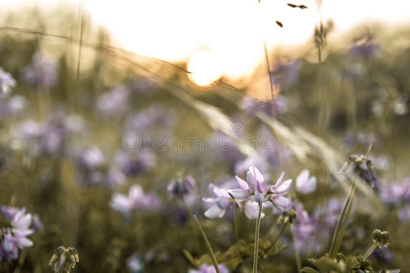 Piękna flora Krymski półwysep obraz stock