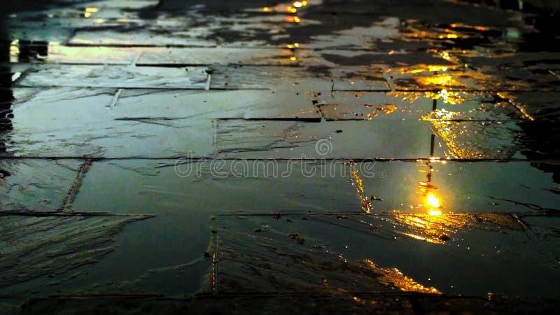 Piękna fotografia mówi natura jak właściwie patrzeje ono zdjęcia stock