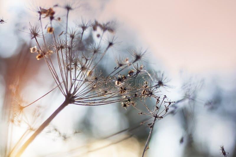 Piękna fotografia z zima krajobrazem Botaniczny tło z zmierzchem Selekcyjna ostrość z bliska Miękcy cienie obrazy royalty free