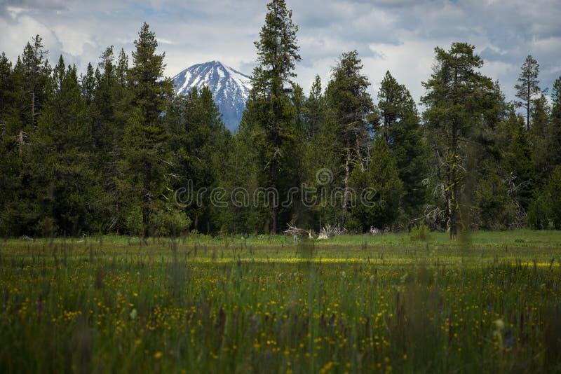 Piękna góra przez drzew zdjęcia royalty free