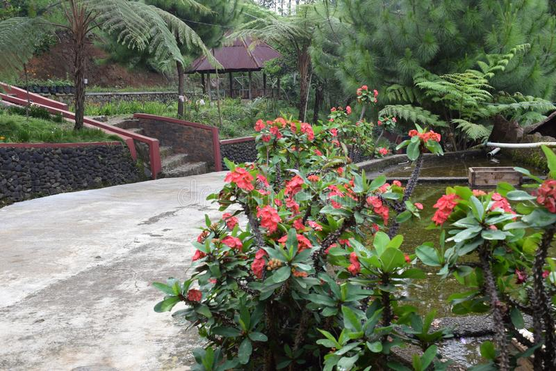 Piękna gospodarstwo rolne w wzgórzu Bandung Indonesia zdjęcie stock