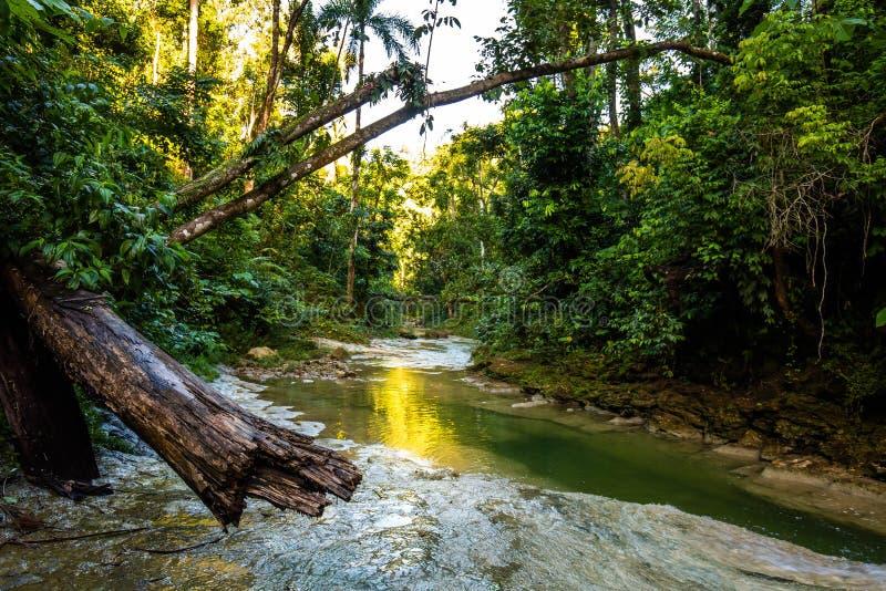 Piękna Gozalandia siklawa w San Sebastian Puerto Rico zdjęcia stock