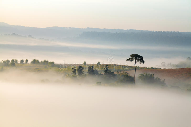 Piękna halna scenerii mgła przy Khao-kho Phetchabun, Tajlandia fotografia stock