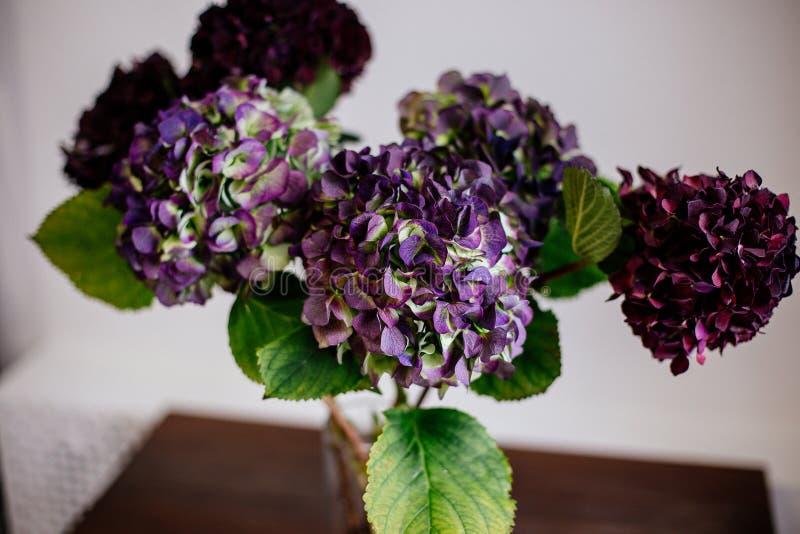 Piękna hortensja w wazie zdjęcie royalty free