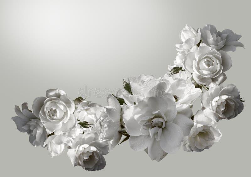 Piękna horyzontalna rama z bukietem białe róże z podeszczowymi kroplami Czarny i biały tonowanie wizerunek zdjęcia royalty free