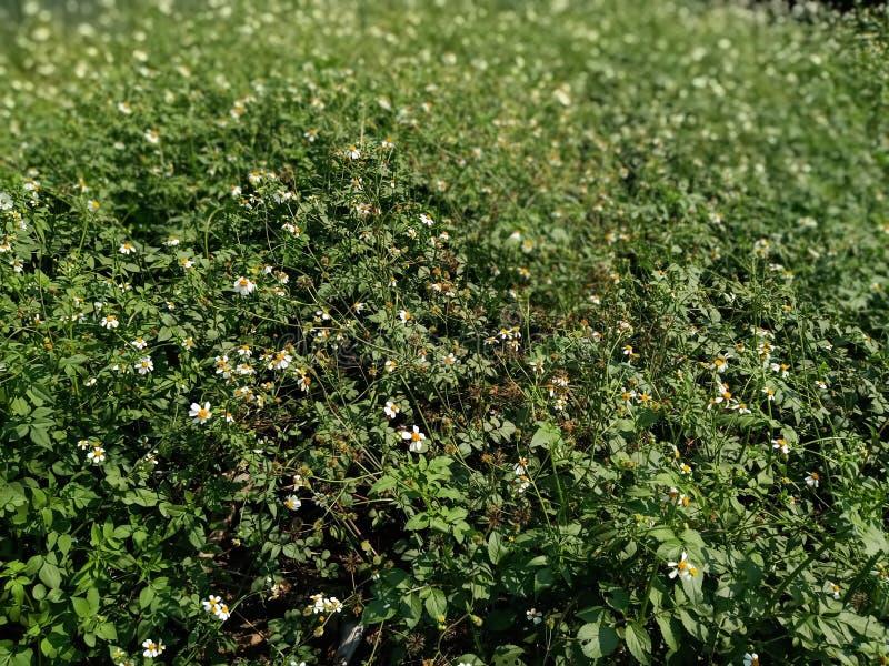 Piękna i atrakcyjna zielona trawa obrazy stock