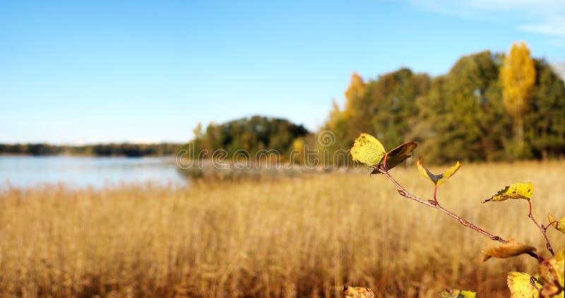 Piękna jesieni scenerii panorama obrazy royalty free