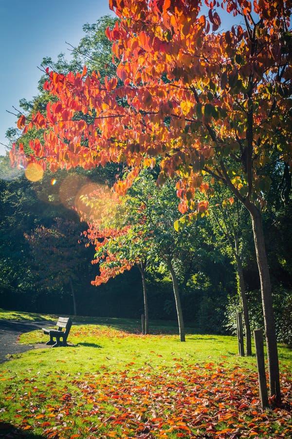 Piękna, jesienna czerwień, i ławka zdjęcia stock