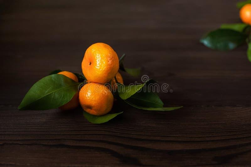 Piękna karmowa fotografia Małe soczyste dojrzałe mandarynki na gałąź z liśćmi obraz stock