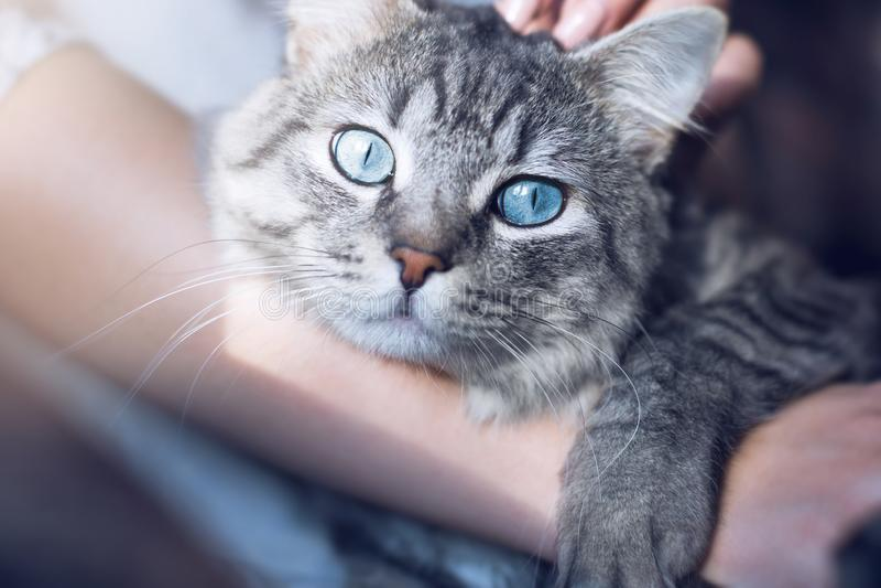 Piękna kobieta trzyma w domu i ściska jej uroczego puszystego kota Zwierzęta domowe, przyjaźń, zaufanie, miłość, styl życia pojęc fotografia royalty free