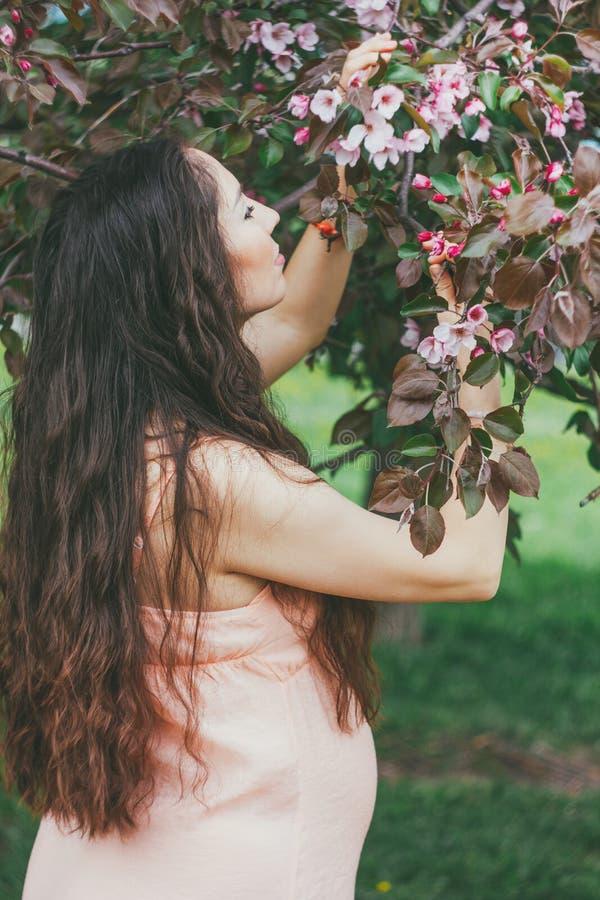Piękna kobieta w ciąży z długim ciemnym włosy obwąchuje kwitnącego App zdjęcie royalty free