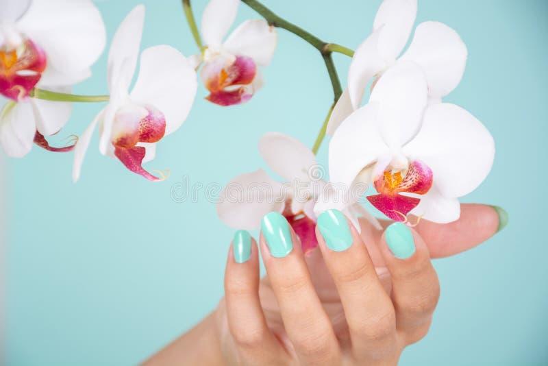 Piękna kobiety ręka z turkusowym kolorów gwoździ połyskiem odizolowywającymi na miękkim błękitnym tle w studiu białym orchidea kw obrazy royalty free