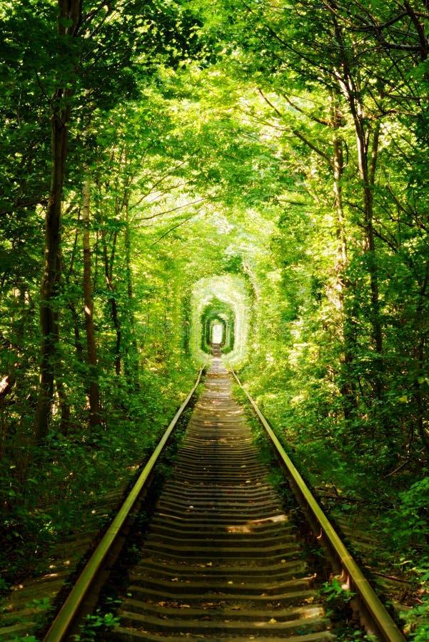 Piękna kolorowa drzewna aleja w lesie, naturalny tło Magiczny tunel miłość, zieleni drzewa i linia kolejowa w Ukraina, obraz royalty free