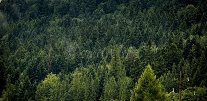 Piękna krajobrazowa natura lasu tropikalnego i góry backgroun fotografia stock